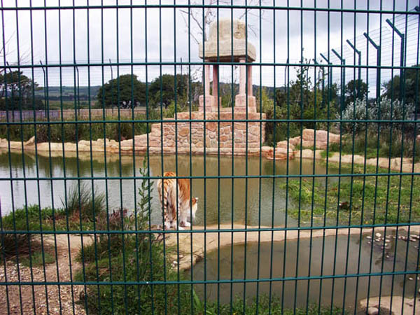 2016041205 Isle of Wight Zoo tiger enclosure low res for web